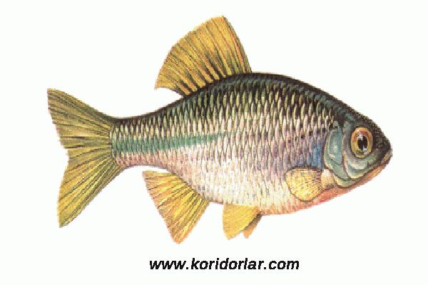 balıkları muhafaza etme, yaz aylarında balık taşıma, yaz aylarında balık saklama